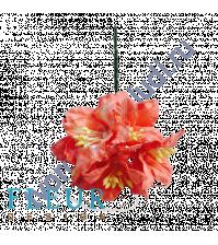 Цветы Лилии нежно-коралловые, размер цветка 3.75 см, 5 шт