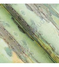 Бумага упаковочная двусторонняя Дерево, 90 гр/м2, 58х58 см