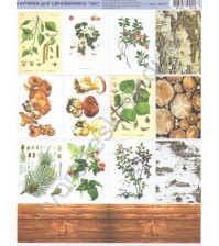 Набор картинок для скрапбукинга Лес, лист 19.5х25 см