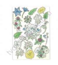 Набор чипборда с цветной печатью Цветочный атлас. Полевые цветы, размер 11.5х16.5 см