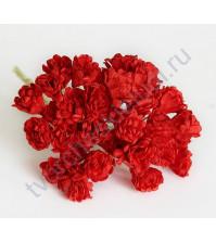 Гипсофилы 10 шт, цвет бордовый