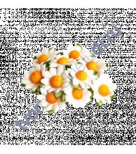 Ромашки белый, 2.5см, 5 шт