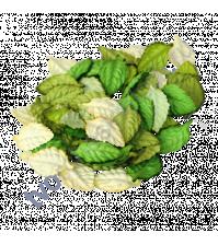 Листья розы средние без веточки Зеленый микс 4.5х2.5 см, 10 шт.