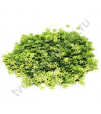 Пайетки звезды с эффектом голографик 7 мм, 10 гр, цвет салатовый