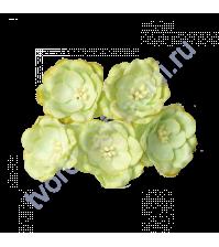 Магнолия 4 см, 5 шт, цвет св. зеленый