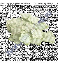Мини-гортензия 2.5-3 см, 10 шт, цвет лимонный