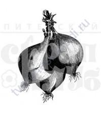 ФП штамп (печать) Луковицы, 2.8х4 см