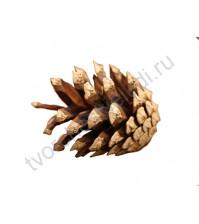 Шишка сосновая, диаметр 3-7 см, 1 штука
