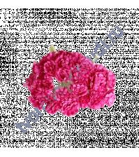 Гипсофилы 10 шт, цвет ярко-розовый