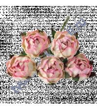 Ранункулюс (лютик садовый) 2.5-3 см, 5 шт, цвет розово-молочный